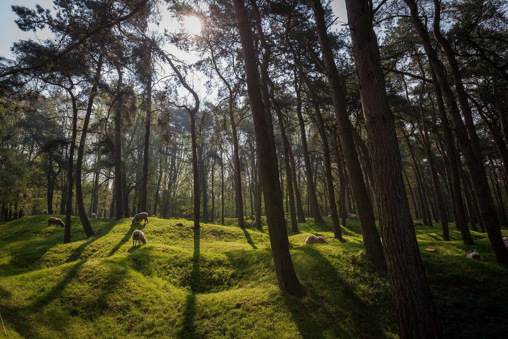 Воронки в лесу от бомб в Вими-Ридже, Франция