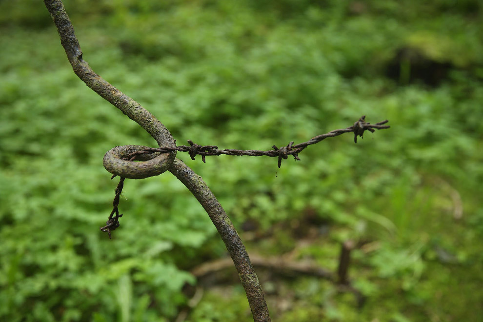 Остатки колючей проволоки на заграждениях тех времен недалеко от Вердена, Франция