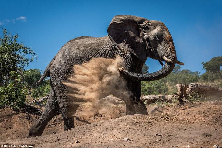 Грязе-пылевые ванны в Ботсване