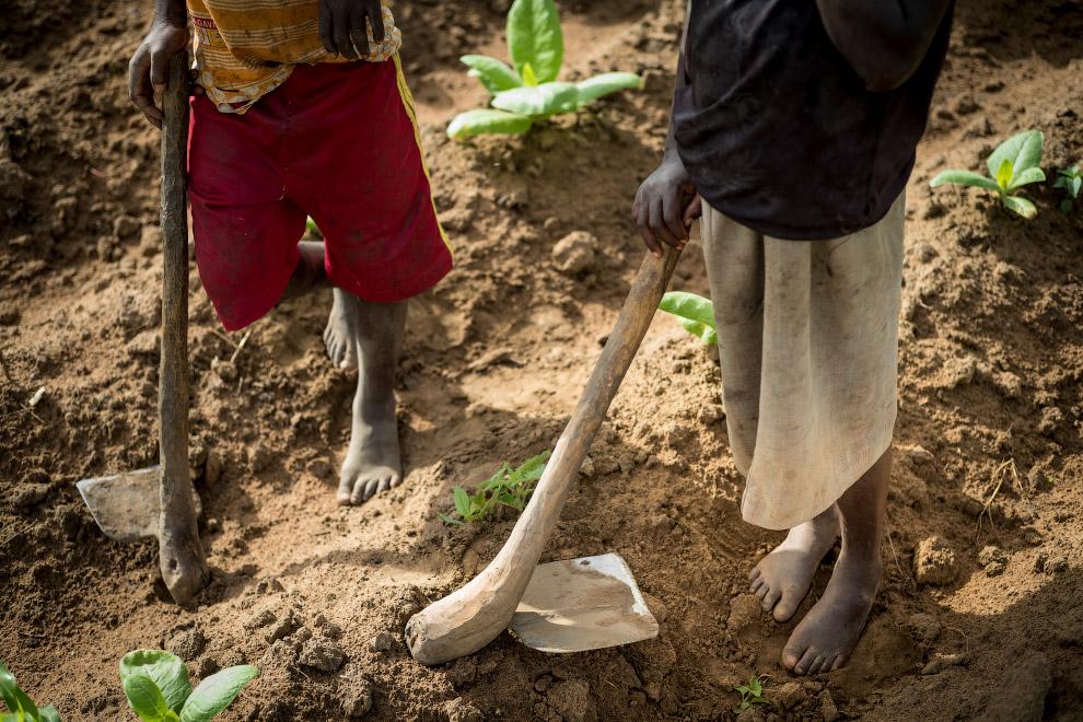 Тютюнові плантації Малаві