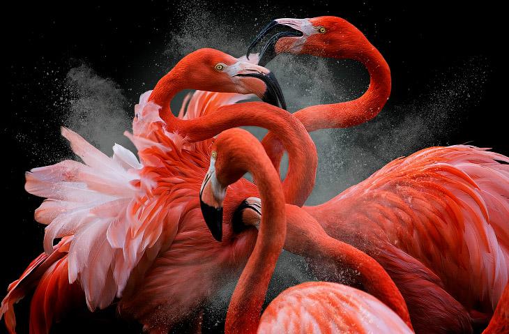 Птичий конкурс UK 2018 Bird Photographer