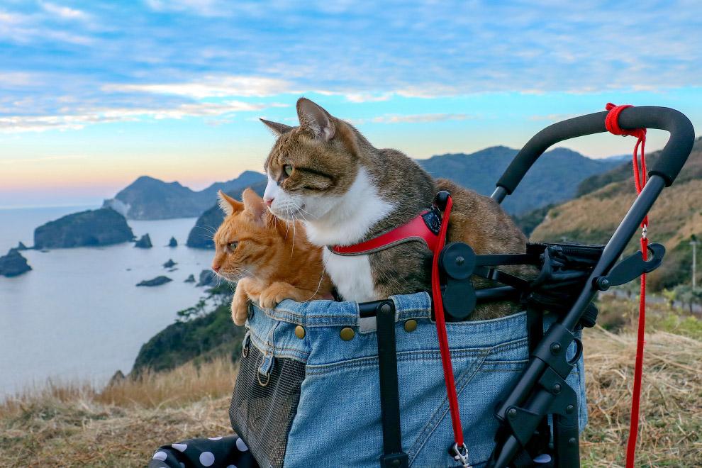 Коты-путешественники