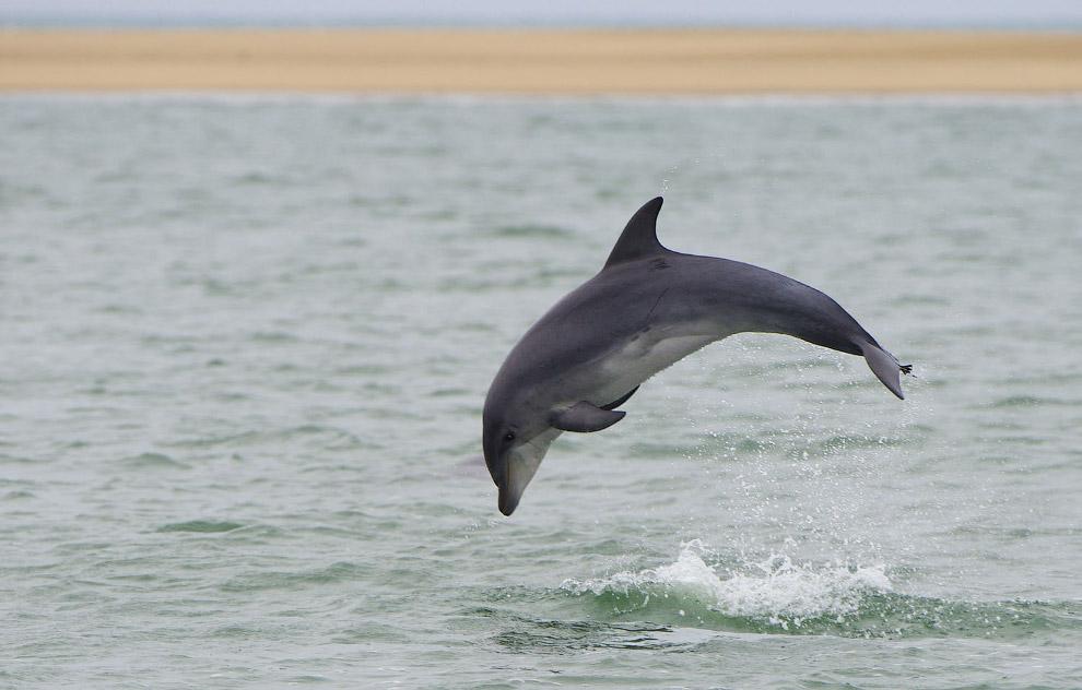 Дельфин в Уолфиш-Бэй