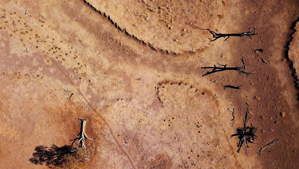 Мертвые деревья и мертвая земля в Новом Южном Уэльсе, Австралия