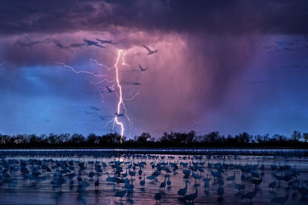 Молнии и птицы, Небраска