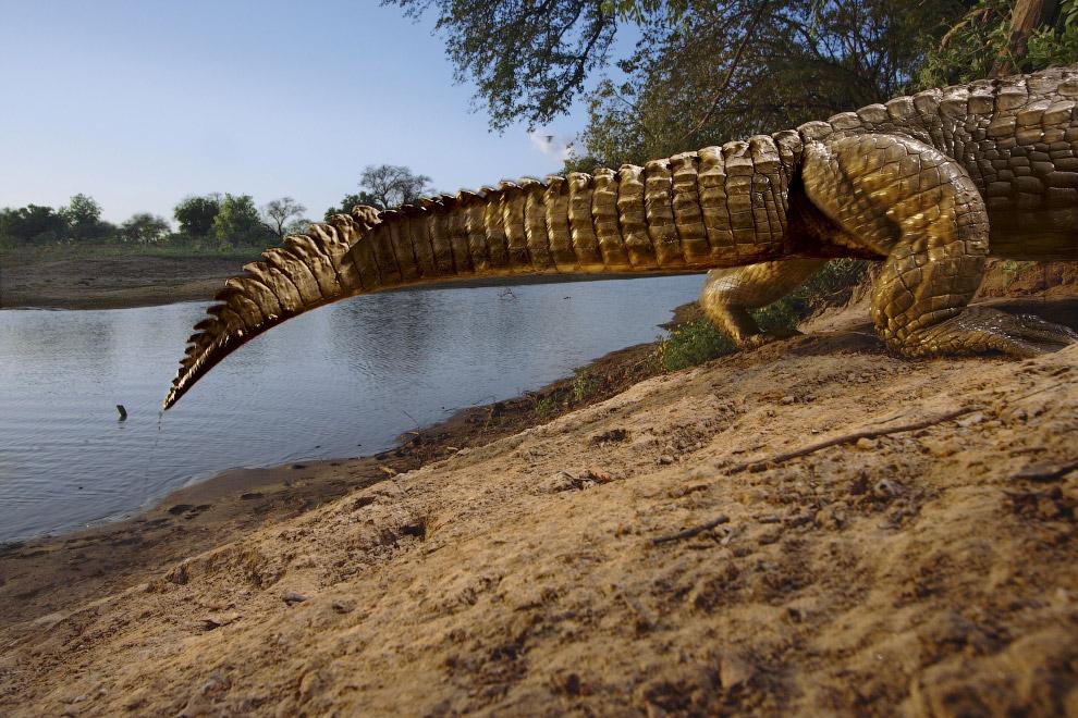 Динозавр вышел из воды