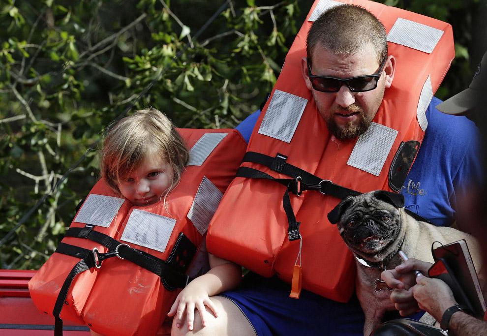 Спасение животных от урагана «Флоренс»