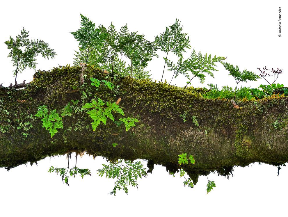 Лес на стволе дерева