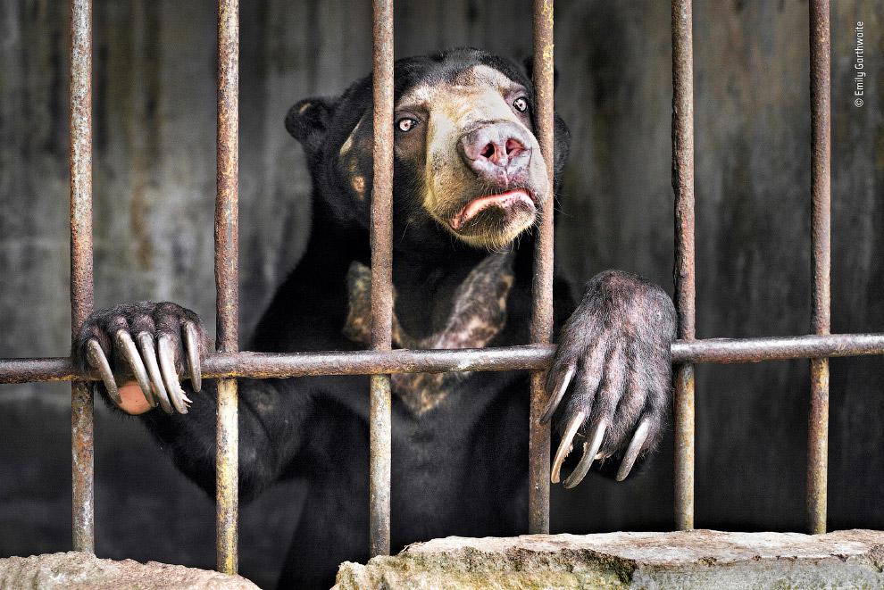 Медведь в зоопарке на Суматре, Индонезия