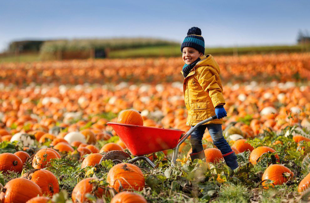 В графстве Ноттингемшир выращивается более 10 миллионов тыкв в год.