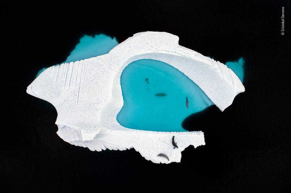 Снимок айсберга необычной формы, сделанный с помощью дрона