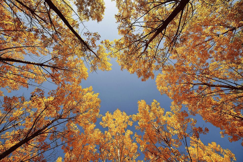 Осенний день в лесу в Ньиредьхаза, Венгрия