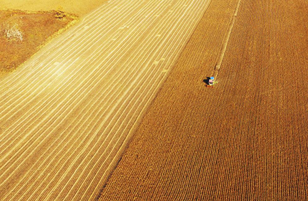 Осенний урожай в Чжанье, Ганьсу, Китай