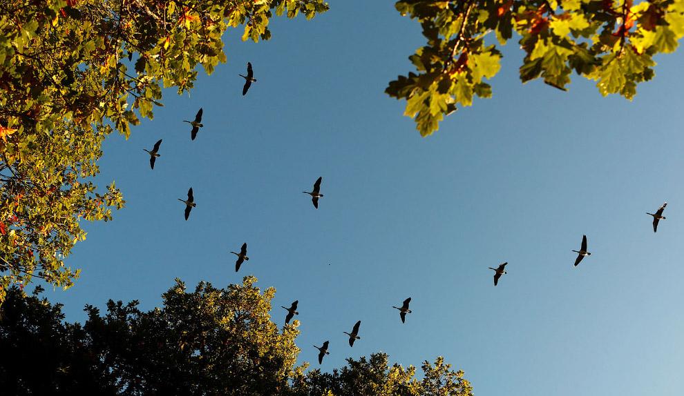 Птицы полетели на юга, Питлохри