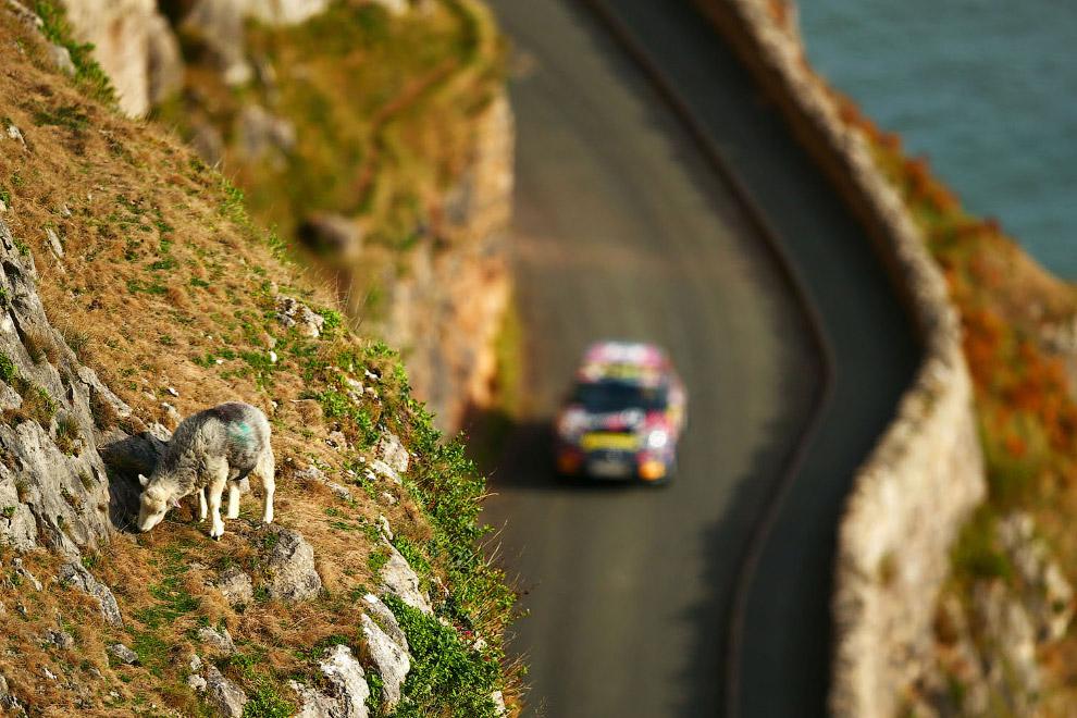 Экстремальная овечка