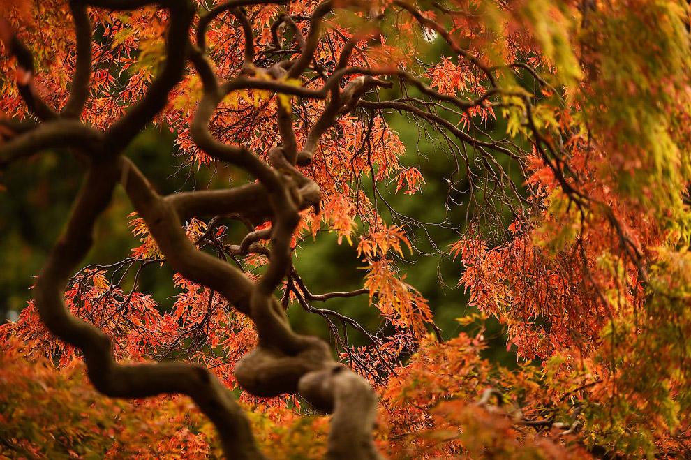 Осенние деревья в Дублине, Ирландия