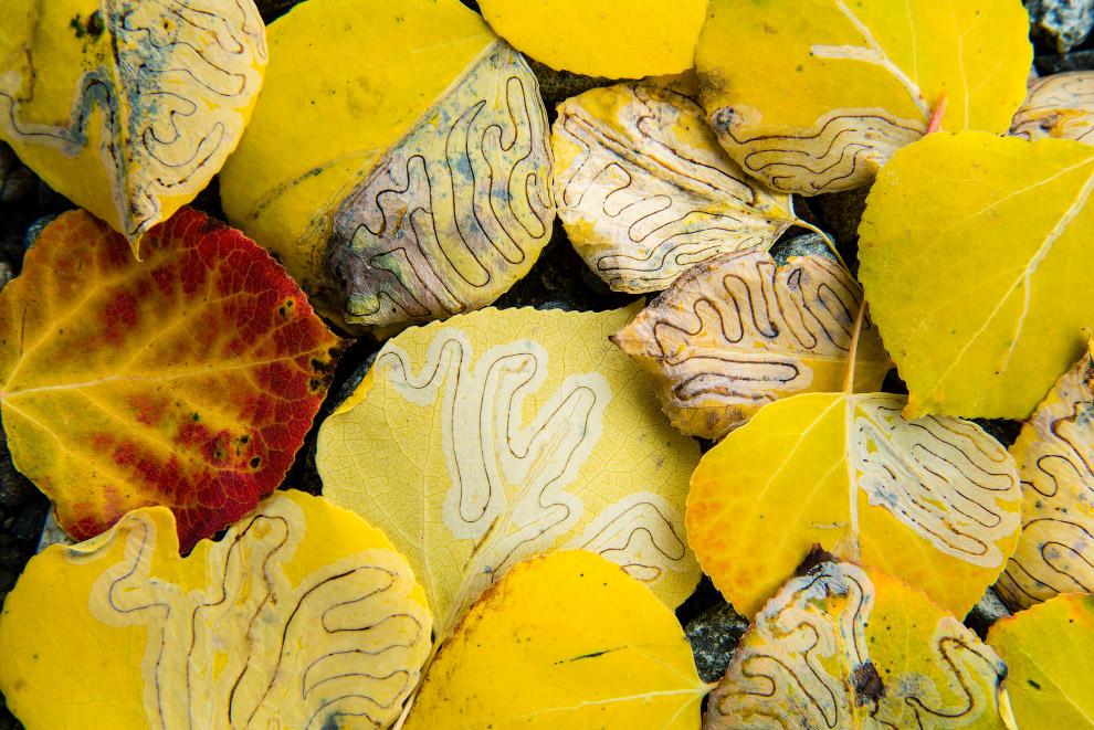 Тропы жизни. Следы личинок на опавшей листве