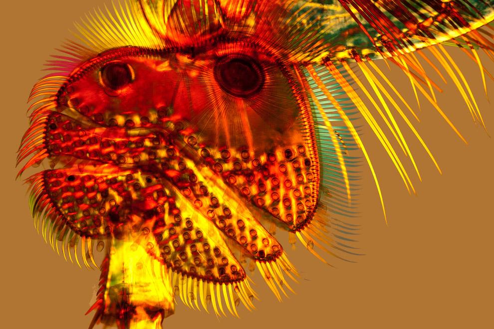 Присоски на ноге жука-плавунца