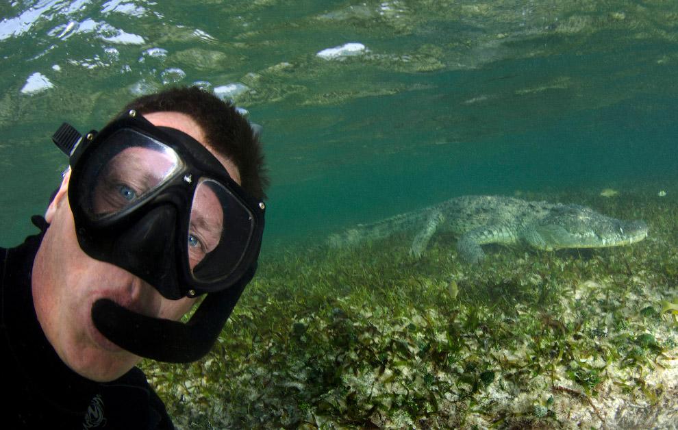 Заплыв с крокодилом на юго-востоке Мексики