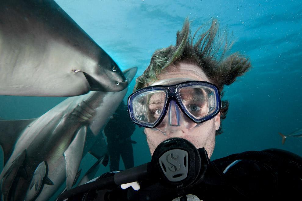 Селфи с акулами в Южной Африке