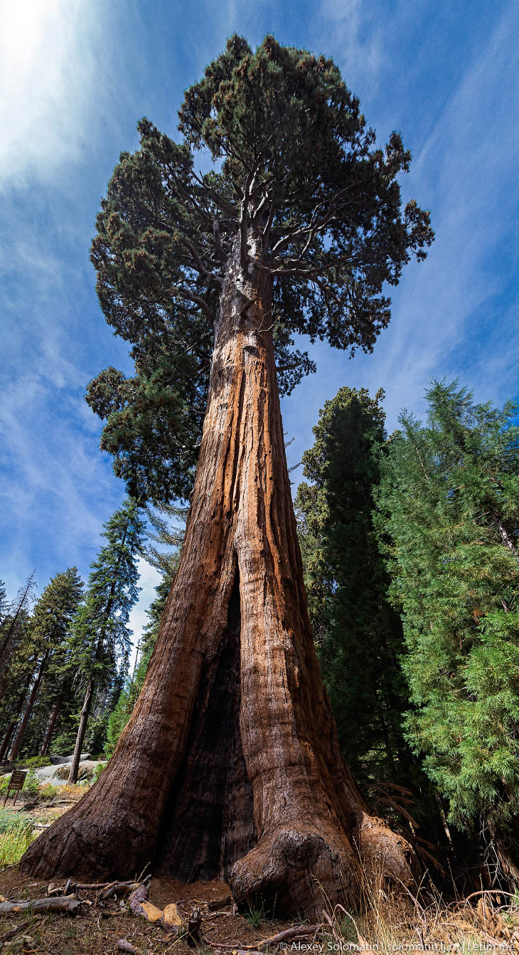 Национальный парк Секвойя (Sequoia National Park)
