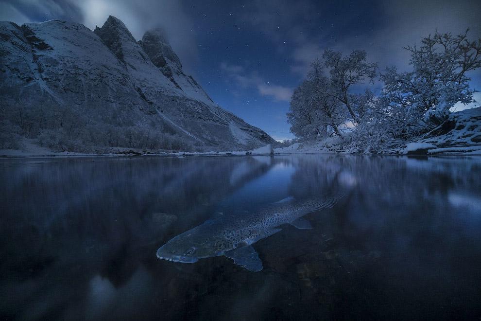 Форель, Норвегия и лунная ночь