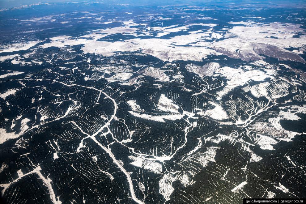 Вырубка лесов на Дальнем Востоке.