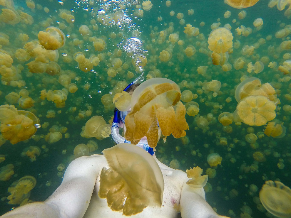 В гармонии с медузами