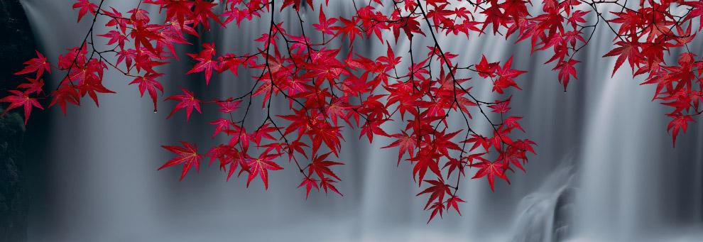 Алые листья перед водопадом в Вашингтоне