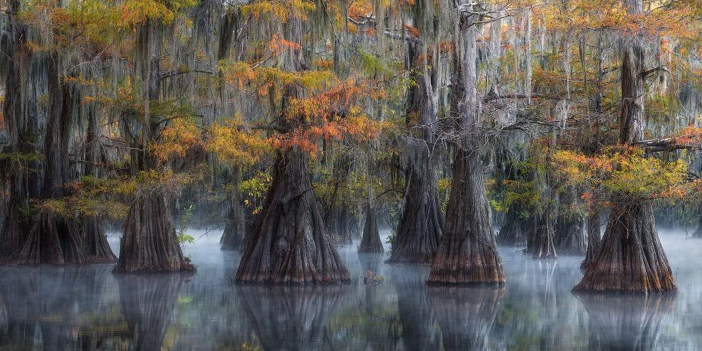 Сказочные деревья отражаются в болотных водах юга США