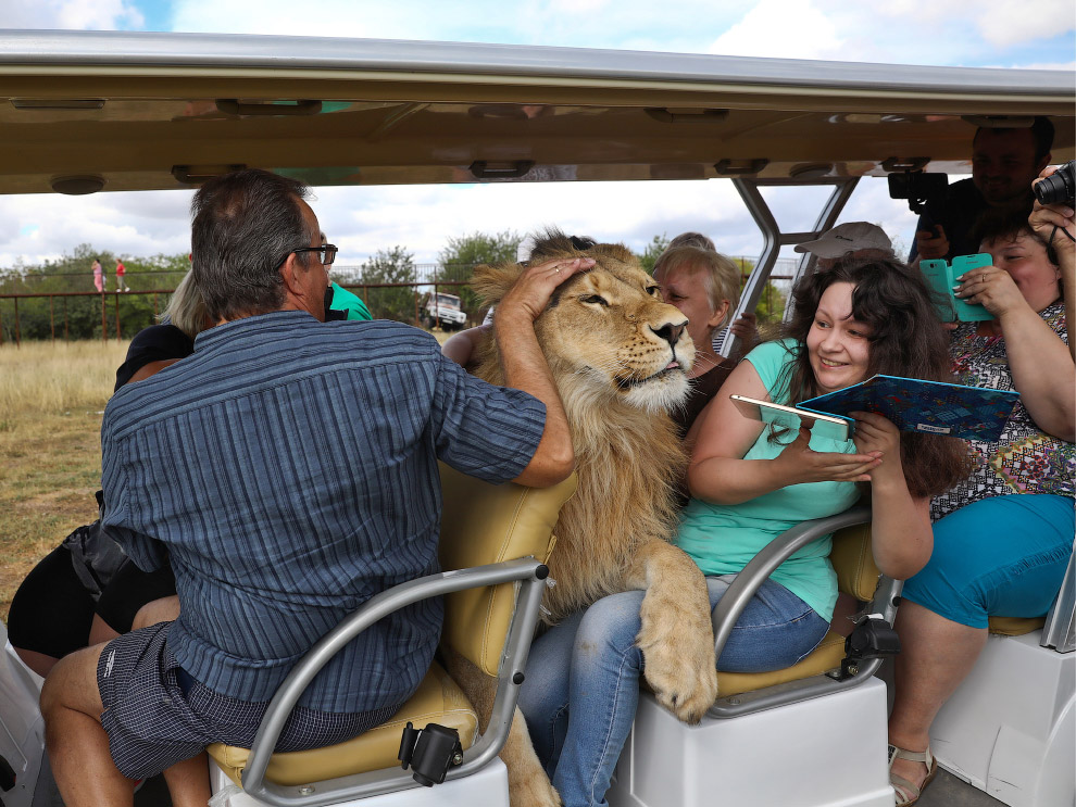 Дружелюбный лев