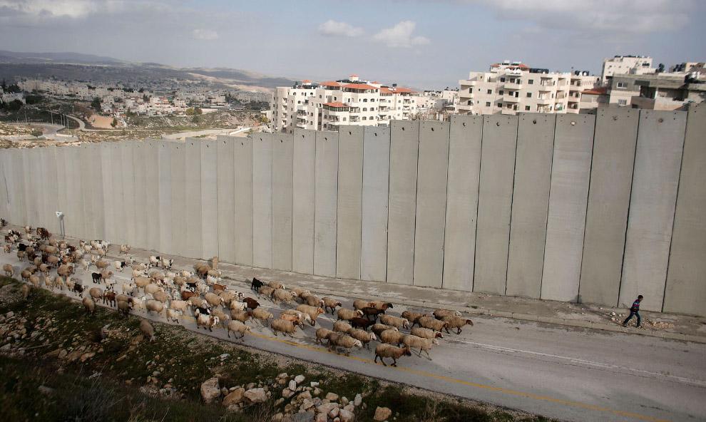 Палестина и жилой район на северо-востоке Иерусалима Писгат-Зеэв