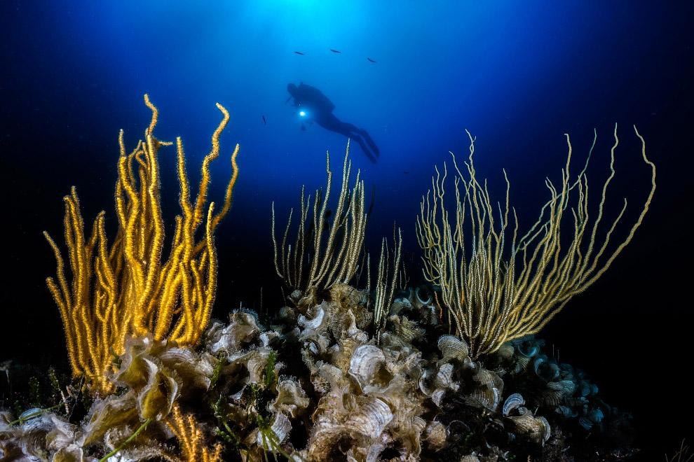 Аквалангист и подводная растительность