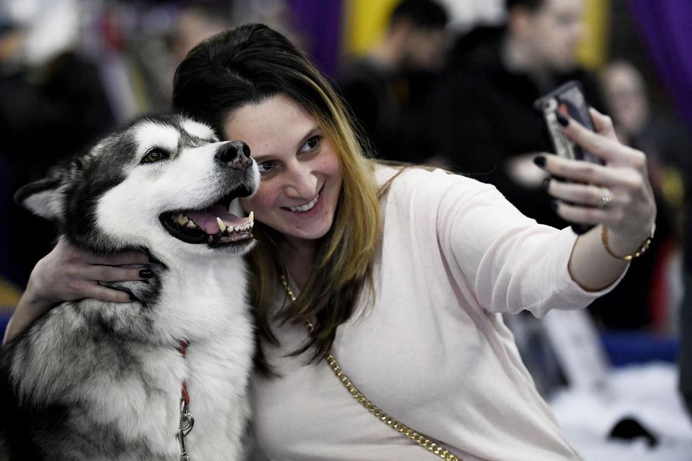 Выставка собак Westminster Kennel Club 2019