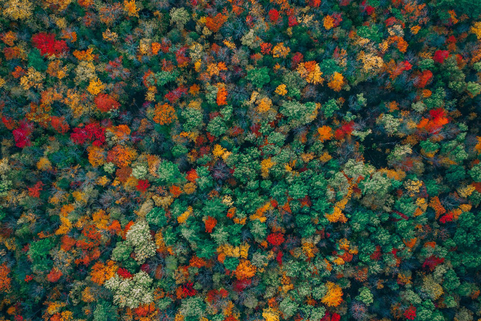 Лес на побережье, США