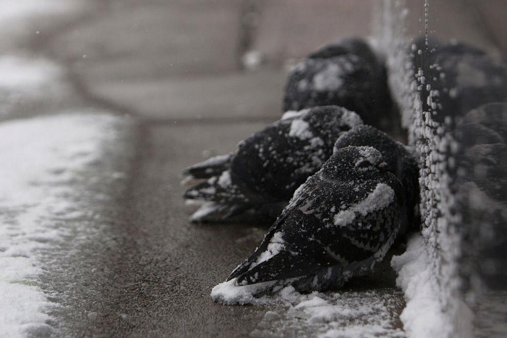 Птицы мерзнут в Нью-Йорке