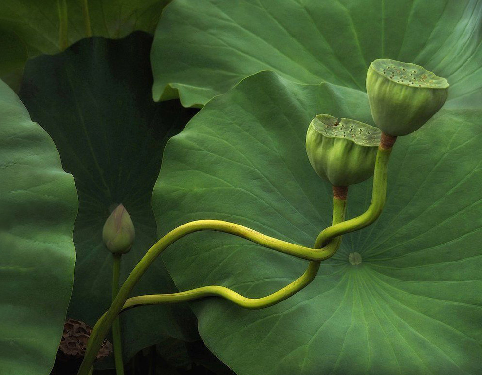 Победитель в категории «Красота растений»