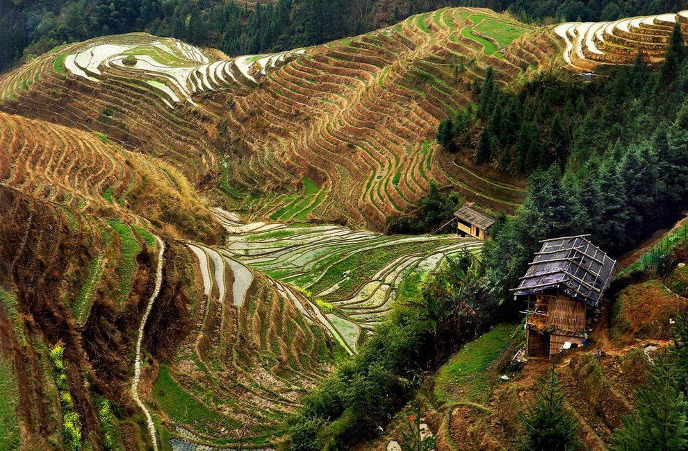 Рисовые террасы, провинция Гуанси, Китай