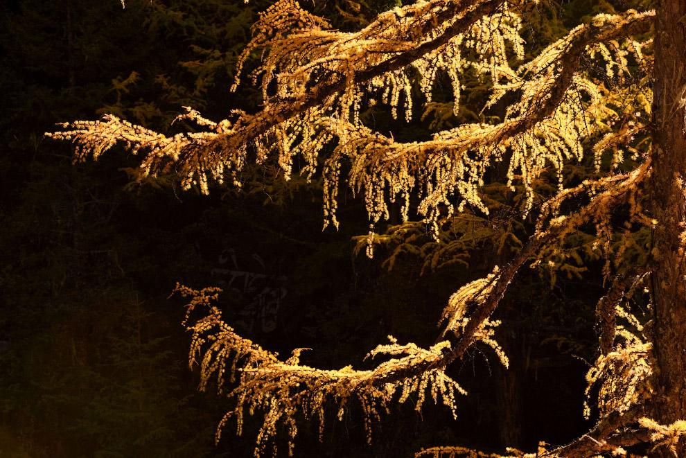 Модрина в Національному парку Ядін