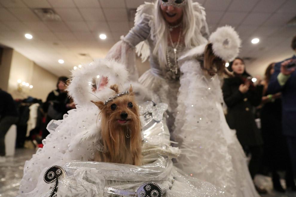 New York Pet Fashion Show