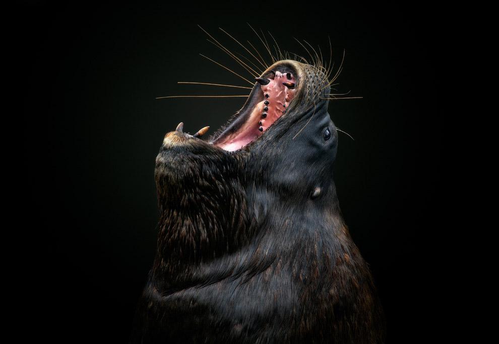 Морський лев