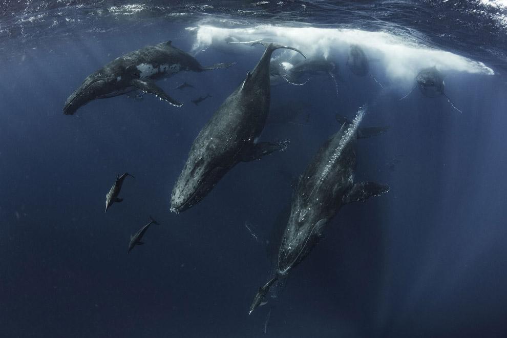 Стадо китов