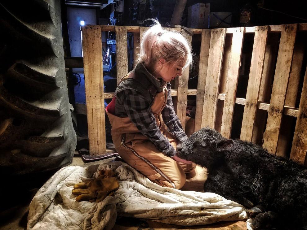 Уход за новорожденным теленком на ферме