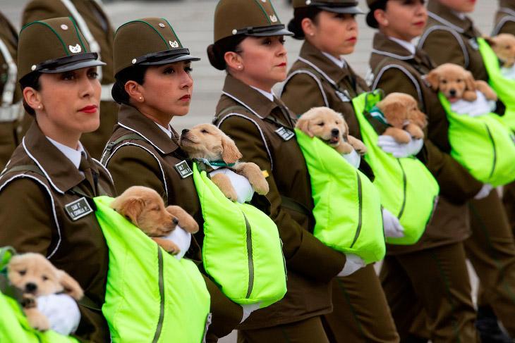 Чилийские полицейские маршируют со щенками