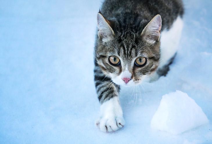 Интересные факты о кошках, которые вы точно не зналиИнтересные факты о кошках, которые вы точно не знали