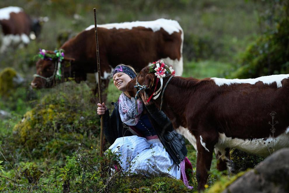 Коровы любвеобильны, разве нет