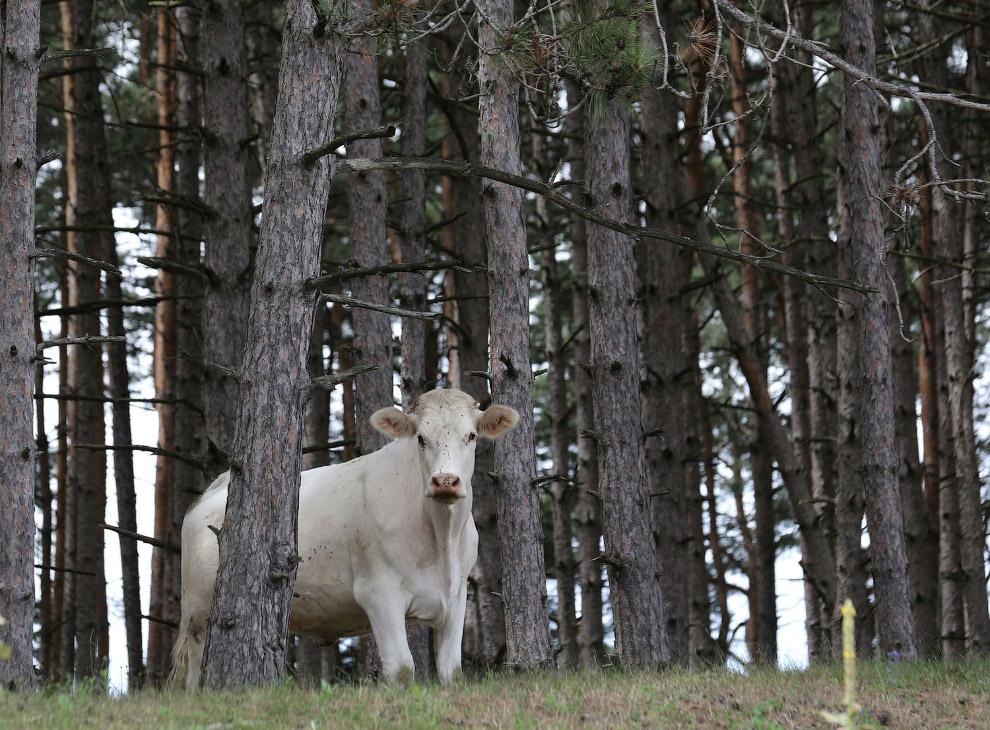 На страже канадских лесов в Онтарио