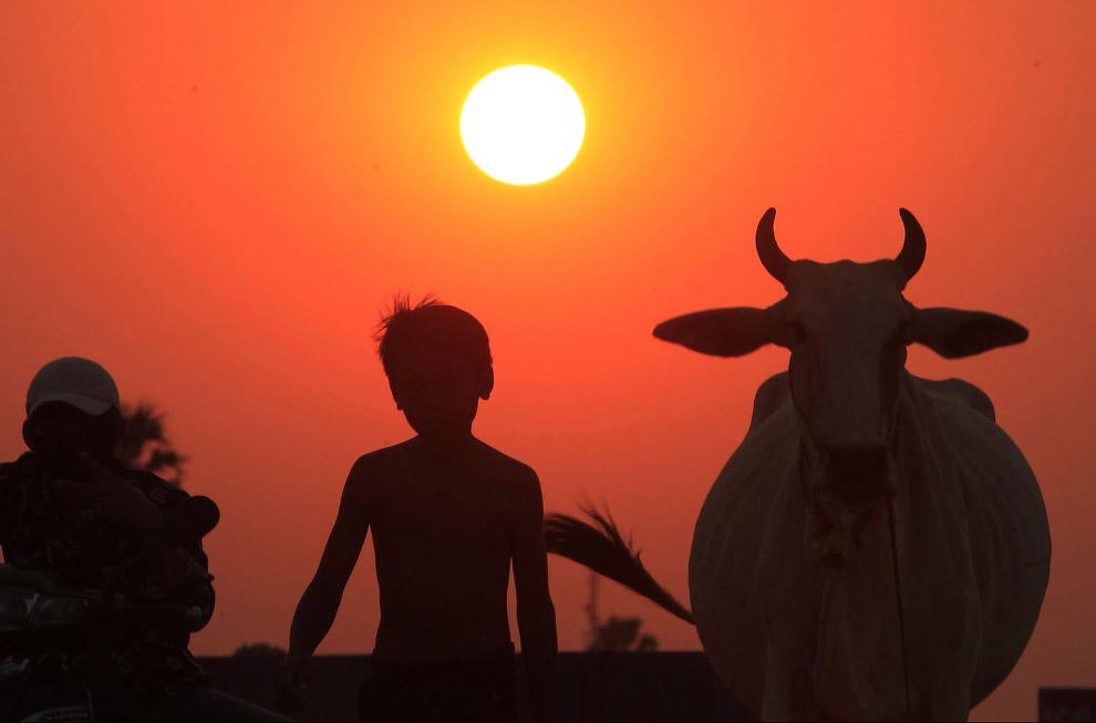 Семья и их корова, Камбоджа