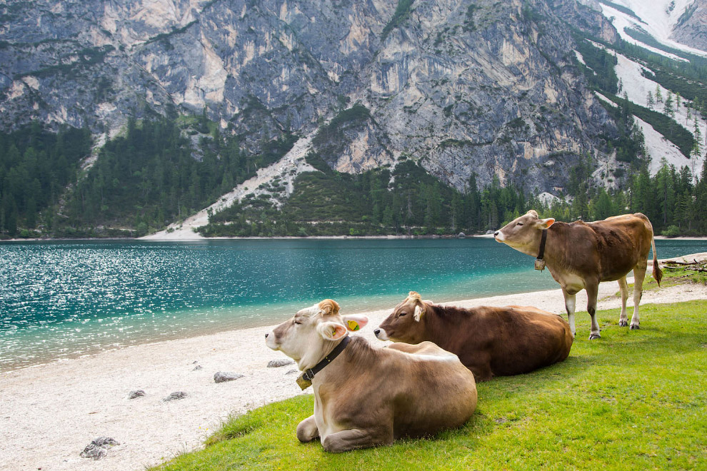 Созерцание в Доломитовых Альпах, Италия