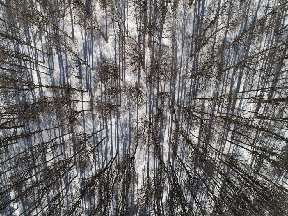FRANCE-VOSGES-FOREST-NATURE